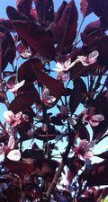 IMG_0947 arbuste en fleur